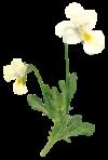 黄色の花のイメージ